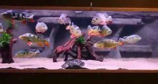 Best Fish Tank Aquarium | Aquariums fish