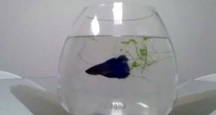 Betta Fish Aquarium Design