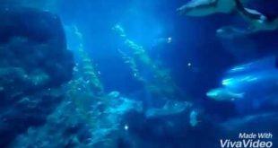 Fish aquarium Bangkok Thailand