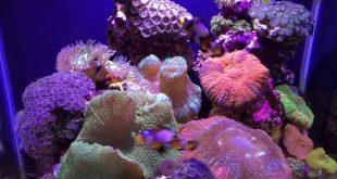 Marine Aquarium design 5