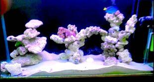 Marine Aquarium setup