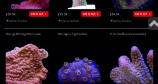Miss Saltwater tank – June Prize competition…Results!