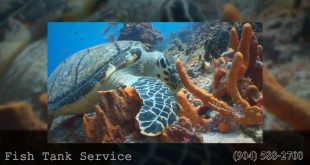 Saltwater Aquarium Jacksonville | 904 588 2700 | Jacksonville, FL