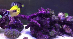 saltwater fish in my aquarium 125 gallons