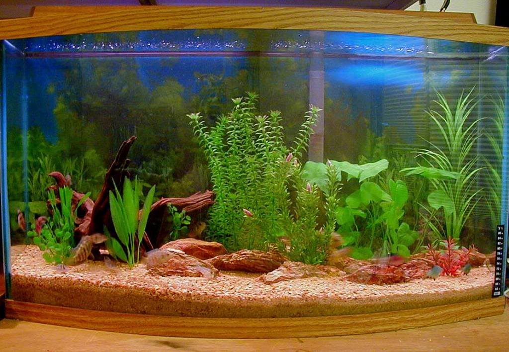 Freshwater aquarium sand small or rocks what is the for Sand for fish tank