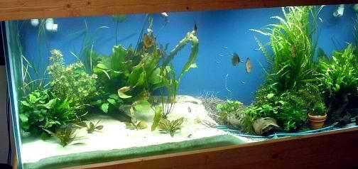 Using freshwater aquarium sand in your tank my aquarium for Black sand fish tank
