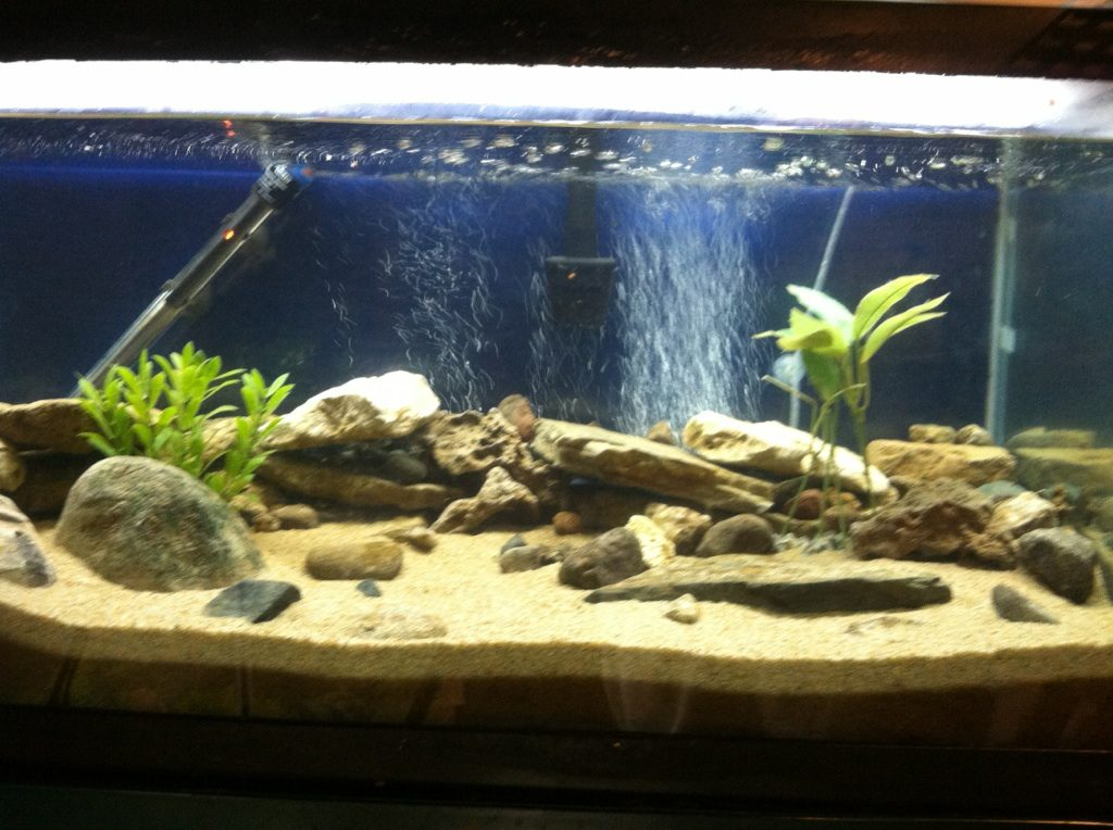 Freshwater aquarium substrate what you need to know for Sand for fish tank